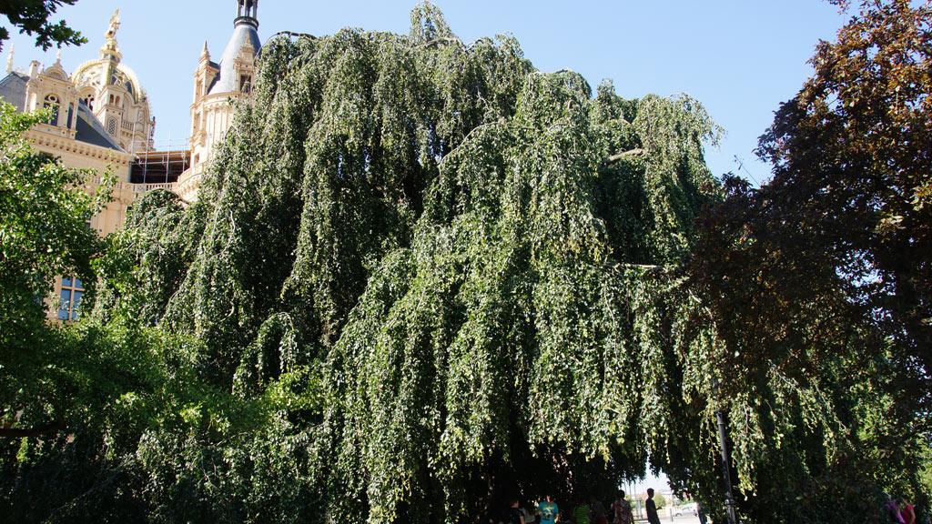 Bestandsaufnahme - Baumpflege Sievers 06