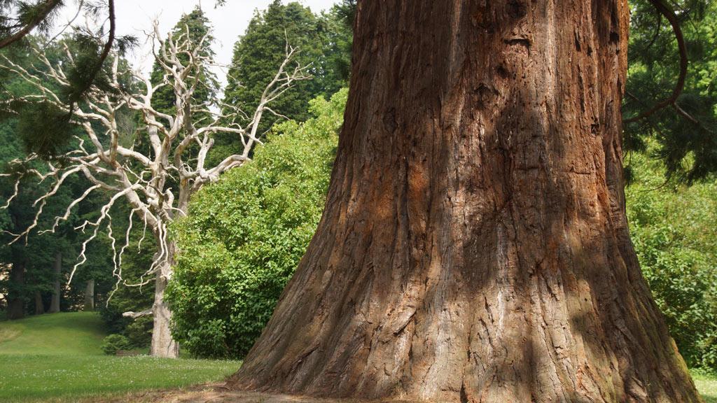 Bestandsaufnahme - Baumpflege Sievers 05