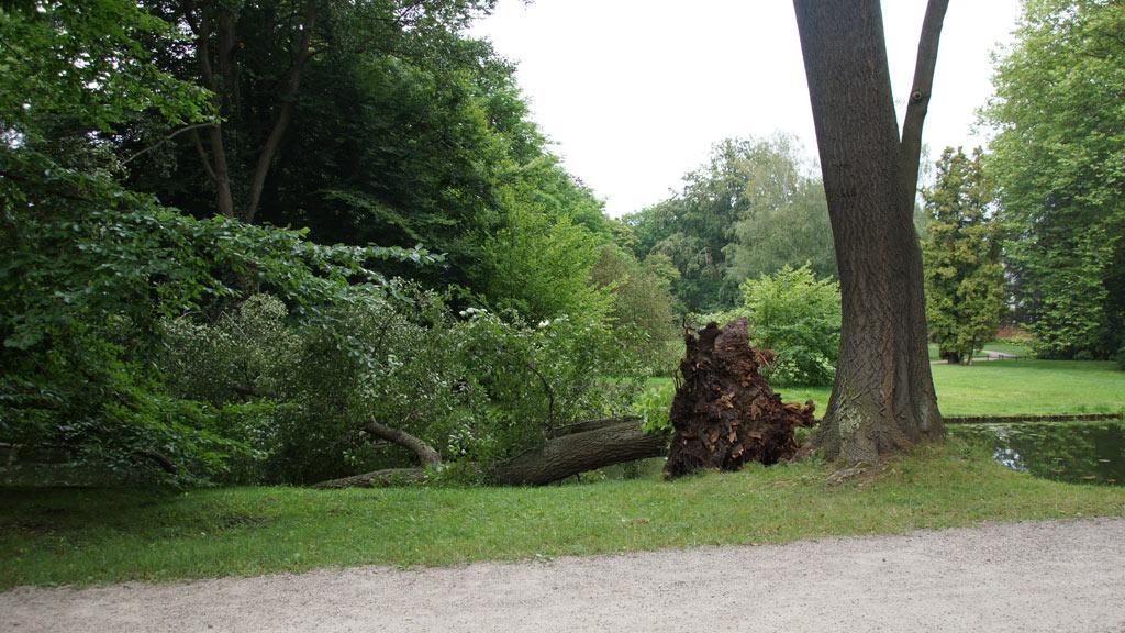 Bestandsaufnahme - Baumpflege Sievers 04